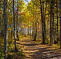 Autumn Trails (24399359454).jpg