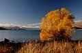 Autumn at Lake Tekapo NZ (13) (8671234720).jpg