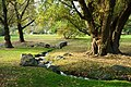 Autumn view - Brooklyn Botanic Garden - Brooklyn, NY - DSC07944.JPG