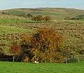 Autumnal colours near Cargan - geograph.org.uk - 1547794.jpg