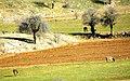 Aydınkışla köyü - panoramio (8).jpg