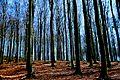 Bad Schandau Forest.JPG