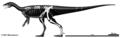 Bagualosaurus agudoensis.png