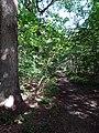 Balade en Forêt de Verrières le 20 août 2017 - 046.jpg