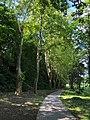 Balatonszemes bycle road.jpg
