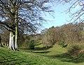 Baldwyn's Glen near Munslow, Shropshire - geograph.org.uk - 675403.jpg