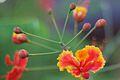 Bali 030 - Ubud - flower.jpg