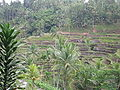 Bali rice terraces.JPG