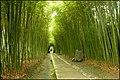 Bamboo Forest, Longhua Martyr's Cemetery, Shanghai - panoramio.jpg