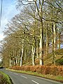 Bank Of Trees Between Kirkton and Duncow - geograph.org.uk - 353729.jpg