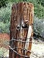 Barbed Wire, Oakmont Park, Redlands, CA 1-2012 (6803052021).jpg