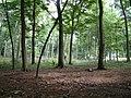 Bear Wood - geograph.org.uk - 38845.jpg