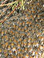Bee (1).jpg