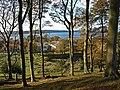 Beech Trees, Fairlie - geograph.org.uk - 1028663.jpg