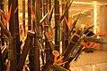Beijing, China (38179186402).jpg