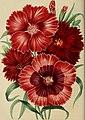 Belgique horticole (20364066845).jpg