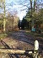 Benyons Enclosure, Ufton Woods - geograph.org.uk - 1083239.jpg
