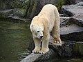 Berlin Zoo (6264642946).jpg