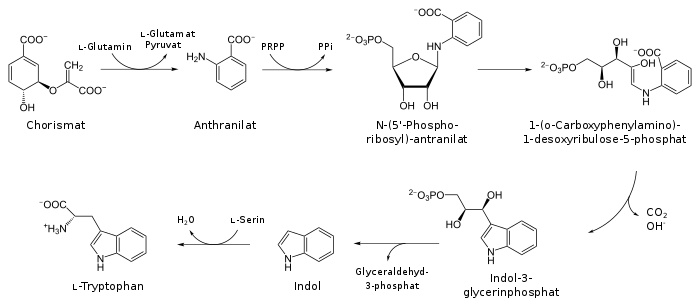 Biosynthesis of tryptophan.svg