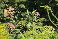 Biotopo inghiaie fiore.jpg