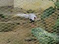Bird Park in Kuala Lumpur (Malaysia) (7).jpg