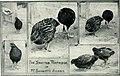 Bird notes (1913) (14563418389).jpg