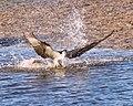 Birds (17548252829).jpg