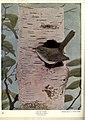 Birds of Buzzard's Roost (Plate XXI) (6279973170).jpg