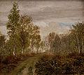 Birketræer på Læsø efter regn.jpg