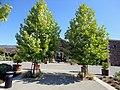 Black Stallion Winery, Napa Valley, California, USA (6242288256).jpg