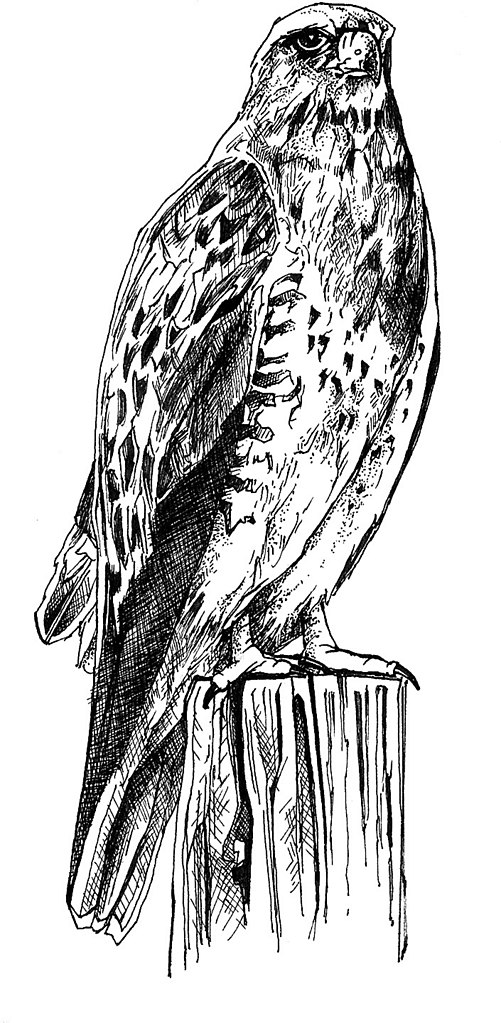 Line Art Body : File black and white line art drawing of bird body g