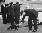Blackie and Churchill (cropped2).jpg