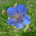 Blue - Flickr - Stiller Beobachter (1).jpg