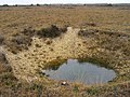 Bomb crater near Leaden Hall, New Forest - geograph.org.uk - 277111.jpg