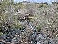 Bonita Creek Flowing Into San Diego Creek.jpg