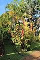 Botanical Gardens Kauai, Hawaii - panoramio.jpg