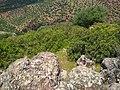 Bouachouch forest. Ait mimoun. Khemisset 4.jpg