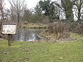Brampton Conservation Pond - geograph.org.uk - 118219.jpg