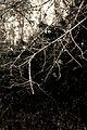 Branching Out (3321148921).jpg