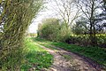 Bridleway from Pleshey to Fanner's Green - geograph.org.uk - 400675.jpg