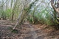 Bridleway heading north from Ware's Wood - geograph.org.uk - 1253001.jpg