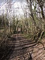 Bridleway through White's Wood - geograph.org.uk - 352370.jpg