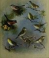 British birds - (20355762345).jpg