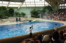 Two dolphins jumping high in the air in an indoor pool before an audience