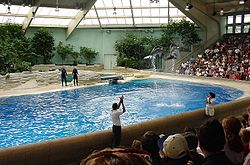 """Two dolphins jumping high in the air in an indoor pool before an audience. Skylights allow light in."