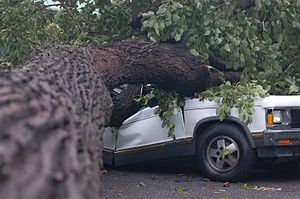 Car crushed by tree from NYC 2007 tornado.