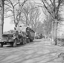 Buffaloes being transported forward in preparation for crossing the Rhine.jpg