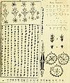 Bulletin scientifique (1840) (19880252163).jpg