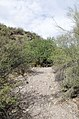 Butcher Jones Trail to Pinter's Point Loop, Tonto National Park, Saguaro Lake, Ft. McDowell, AZ - panoramio (171).jpg