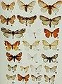 Butterflies and moths of Newfoundland and Labrador - the macrolepidoptera (1980) (19890201903).jpg